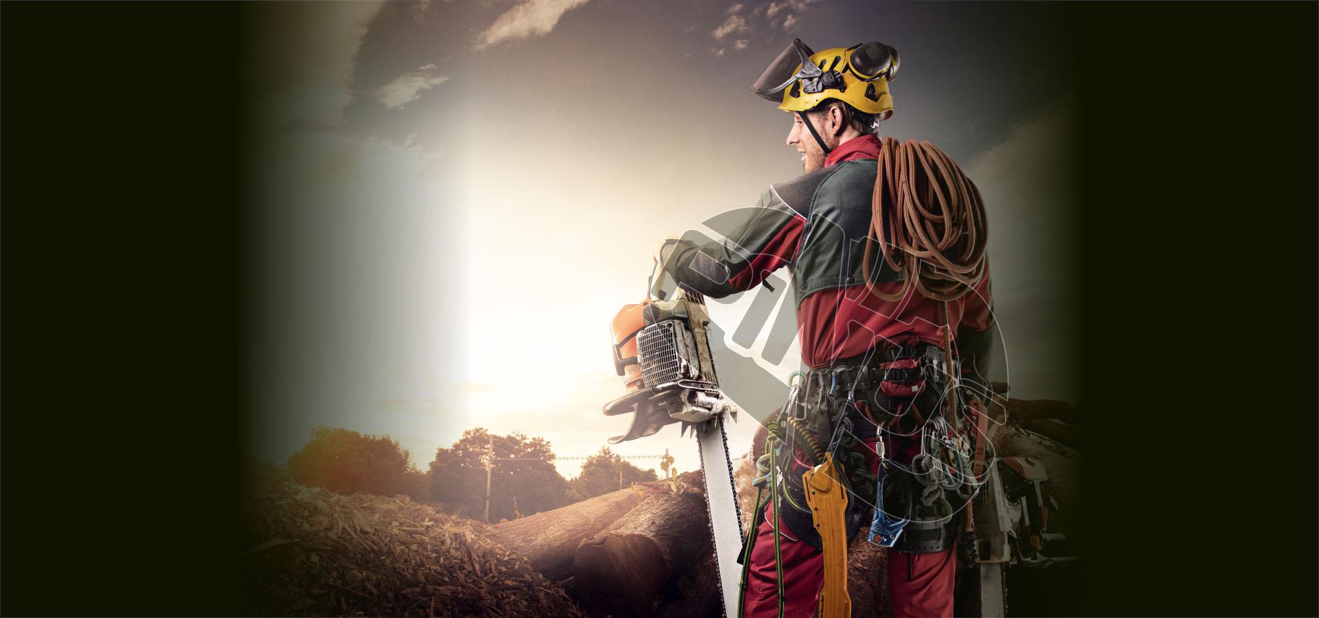 Wycinka i pielęgnacja drzew - PINUS